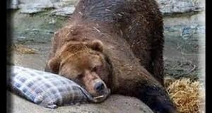 ETF Trading Update Multi-Year Bottom  Bear ETF Oversold